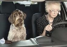 this image shows an elderly female driver with her cute dog sat next to her
