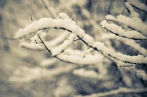 snow laden twigs