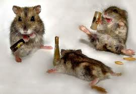 this is a picture of three very drunk mice