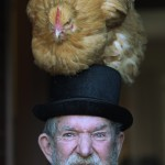 this image shows a fat hen sat on a mans hat. The hat is on his head!