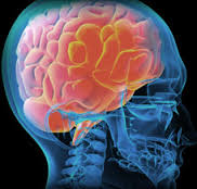 This image shows a red coloured brain within a blue skull