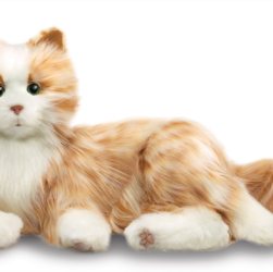 This image shows a ginger and white 'toy'cat. It has white paws and and chest